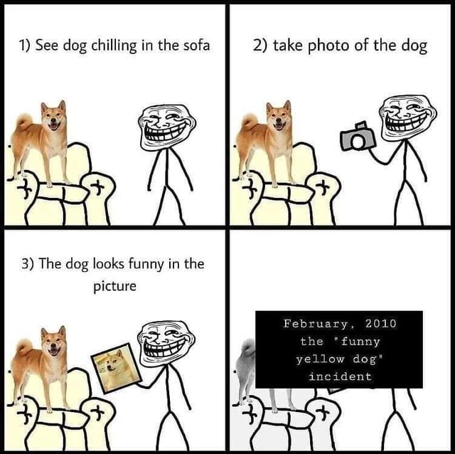 1 See dog chilling in the sofa 2 take photo of the dog 3 The dog looks funny in the picture February, 2010 unny yellow dog memes