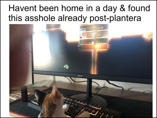 Havent been home in a day and found this asshole already post plantera memes