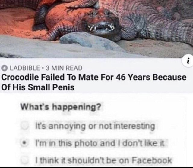 LADBIBLE 3 MIN READ Crocodile Failed To Mate For 46 Years Because Of His Small Penis What's happening it's annoying or not interesting I'm in this photo and I do not like I think it shouldn't be on Facebook meme