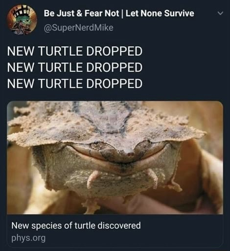 Be Just and Fear Not I Let None Survive SuperNerd NEW TURTLE DROPPED NEW TURTLE DROPPED NEW TURTLE DROPPED New species of turtle discovered phys org memes
