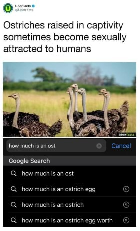 It's been a tough year Ostriches raised in captivity sometimes become sexually attracted to humans how much is an ost Cancel Google Search Q how much is an ost how much is an ostrich egg Q how much is an ostrich meme