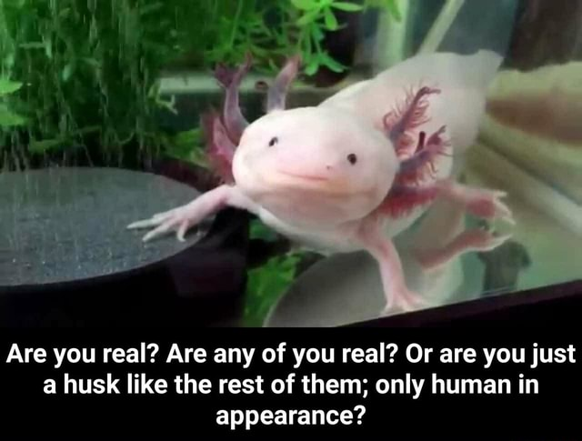 Are you real Are any of you real Or are you just a husk like the rest of them only human in appearance Are you real Are any of you real Or are you just a husk like the rest of them only human in appearance memes