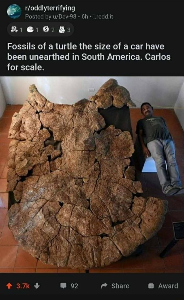 Tfoddlyterrifying Posted by Lredd.ti Bi and 3 Fossils of a turtle the size of a car have been unearthed in South America. Carlos for scale. Share Award memes