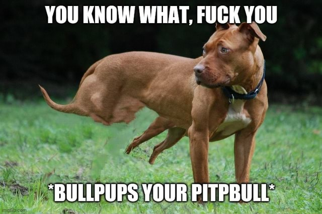 YOU KNOW WHAT, FUCK YOU BULLPUPS YOUR PITPBULL memes
