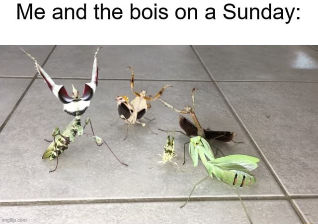 Me and the bois on a Sunday SS memes