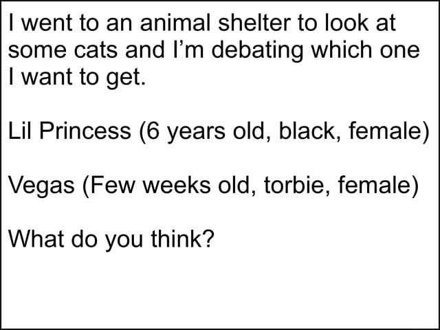 I went to an animal shelter to look at some cats and I'm debating which one I want to get. Lil Princess 6 years old, black, female Vegas Few weeks old, torbie, female What do you think meme