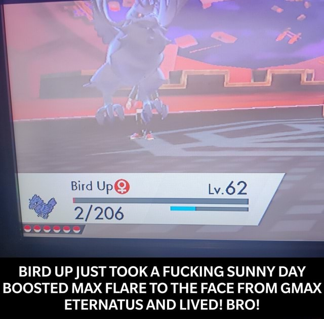 Bird lv.62 BIRD UP JUST TOOK A FUCKING SUNNY DAY BOOSTED MAX FLARE TO THE FACE FROM GMAX ETERNATUS AND LIVED BRO BIRD UP JUST TOOK A FUCKING SUNNY DAY BOOSTED MAX FLARE TO THE FACE FROM GMAX ETERNATUS AND LIVED BRO memes