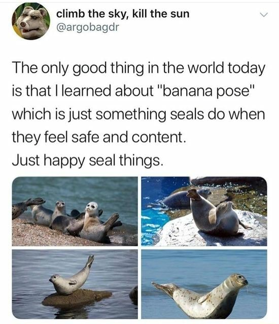 The sky, kill the sum The only good thing in the world today is that I learned about banana pose which is just something seals do when they feel safe and content. Just happy seal things memes