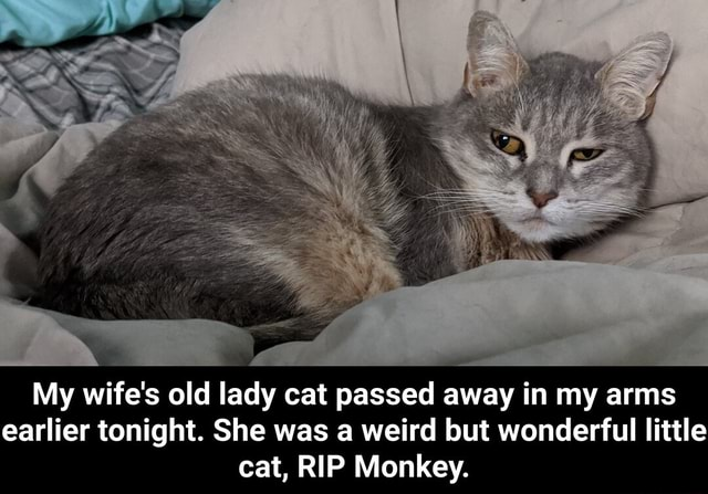 My wife's old lady cat passed away in my arms earlier tonight. She was a weird but wonderful little cat, RIP Monkey.  My wife's old lady cat passed away in my arms earlier tonight. She was a weird but wonderful little cat, RIP Monkey meme