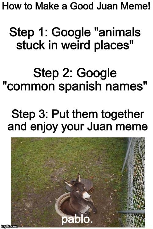 How to Make a Good Juan Meme Step 1 Google animals stuck in weird places Step 2 Google common spanish names Step 3 Put them together and enjoy your Juan meme