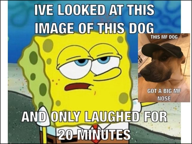 WE LOOKED AT THIS IMAGE OF THIS DOG THIS RIF GOT A BIG MF AND ONLY LAUGHED FOR memes