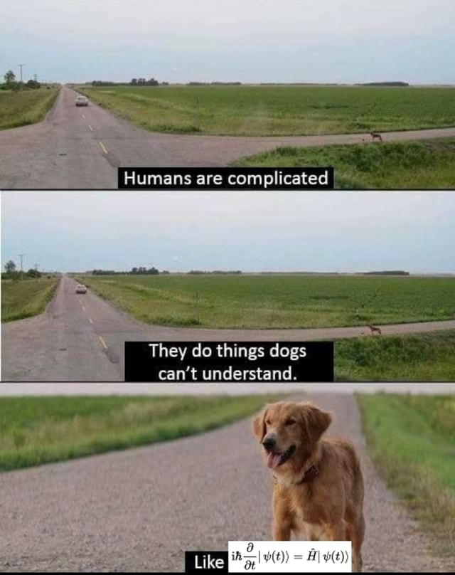 Humans are complicated They do things dogs I can not understand. I Like memes