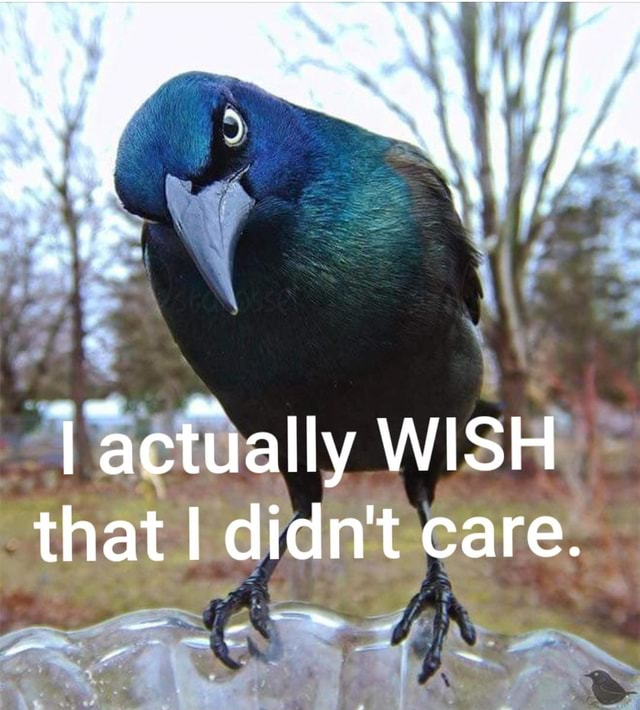 Actually WISH that I didn't care memes