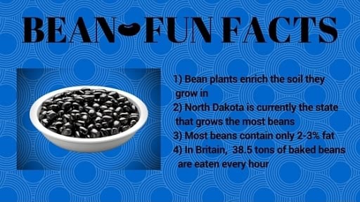 BEANSEUN FACTS 1 Bearr plants enrich the soil they grow in 2 North Dakota is currently the state that grows the most beans 3 Most beans contain only 2 3% fat 4 Britain, 38.5 tons of baked beans are eaten every hour, memes