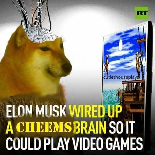 ELON MUSK WIRE UP A CHEEMSBRAIN SO COULD PLAY GAMES memes