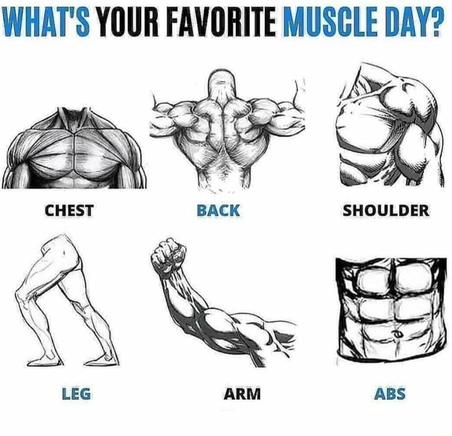 WHAT'S YOUR FAVORITE MUSCLE DAY memes
