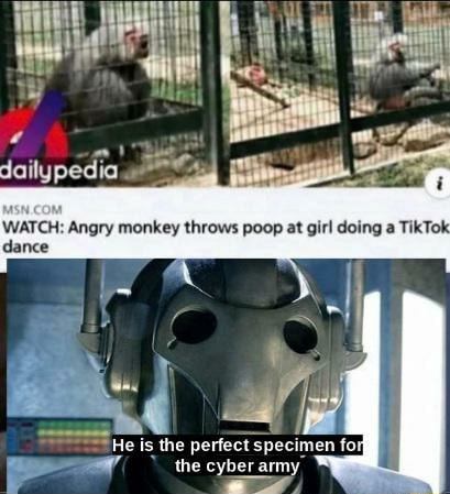 WATCH Angry monkey throws poop at girl doing a TikTok dance the the memes
