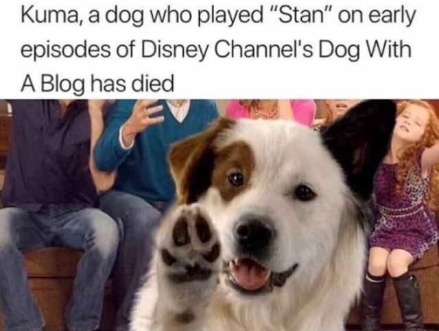 Kuma, a dog who played Stan on early episodes of Disney Channel's Dog With A Blog has died memes