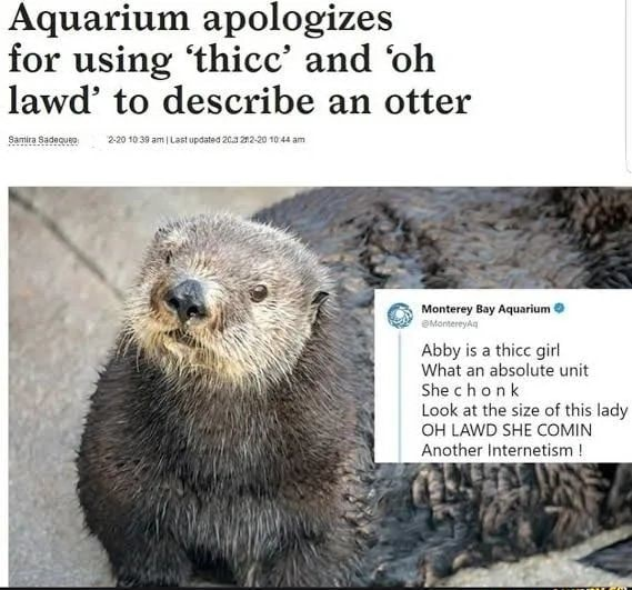 Aquarium apologizes for using thicc and oh lawd to describe an otter Monterey Say Aquarium Abby is a thice girl What an absolute unit She chook Look at the size of this lady OH LAWD SHE COMIN Another Internetism memes