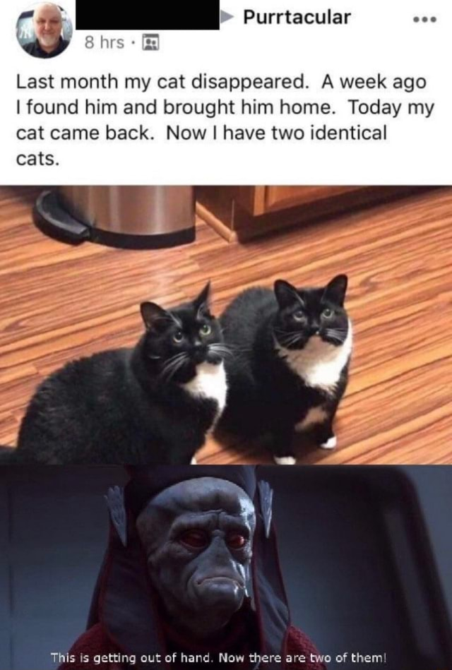 Purrtacular Last month my cat disappeared. A week ago I found him and brought him home. Today my cat came back. Now I I have two identical firs cats. This is getting out of hand. Now there are two of them memes