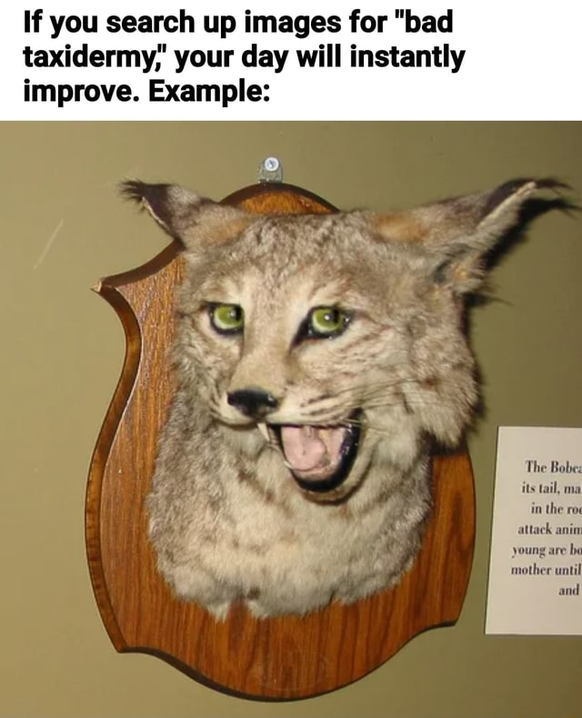 If you search up images for bad taxidermy your day will instantly improve. Example mother until and meme