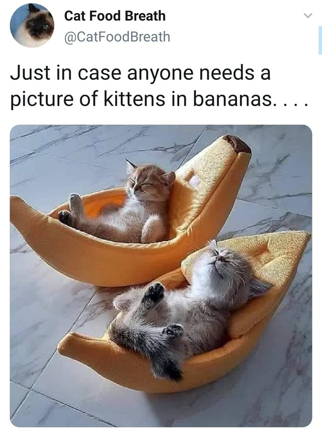 Cat Food Breath Just in case anyone needs a picture of kittens in bananas meme