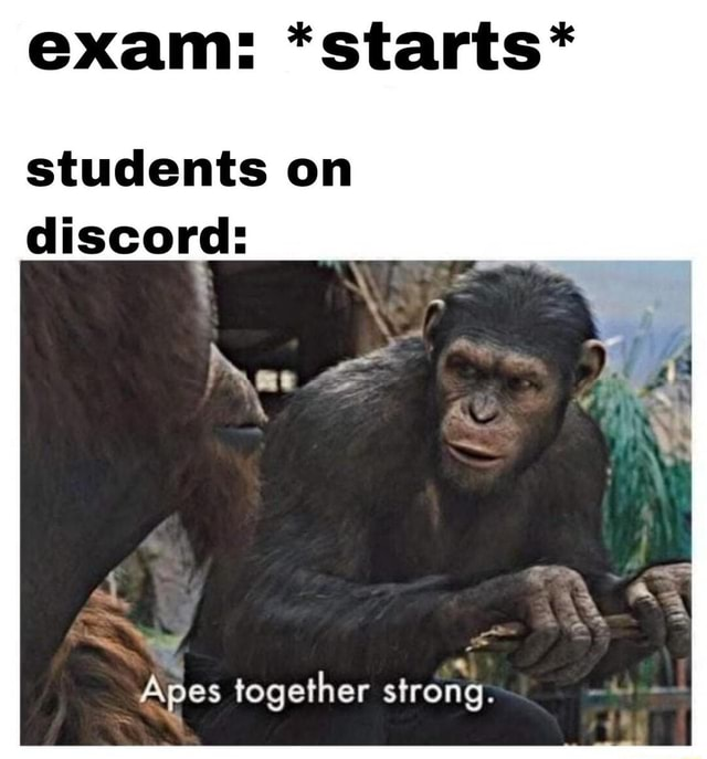 Exam *starts* students on discord ow Apes together strong memes