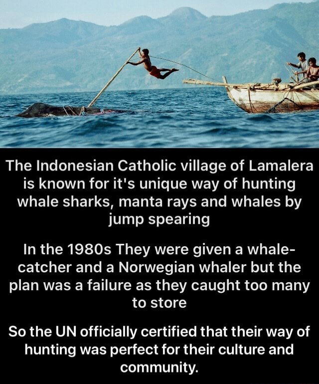 The Indonesian Catholic village of Lamalera is known for it's unique way of hunting whale sharks, manta rays and whales by jump spearing In the 1980s They were given a whale catcher and a Norwegian whaler but the plan was a failure as they caught too many to store So the UN officially certified that their way of hunting was perfect for their culture and community.  So the UN officially certified that their way of hunting was perfect for their culture and community meme
