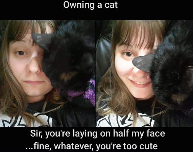 Owning a cat Sir, you're laying on half my face fine, whatever, you're too cute meme