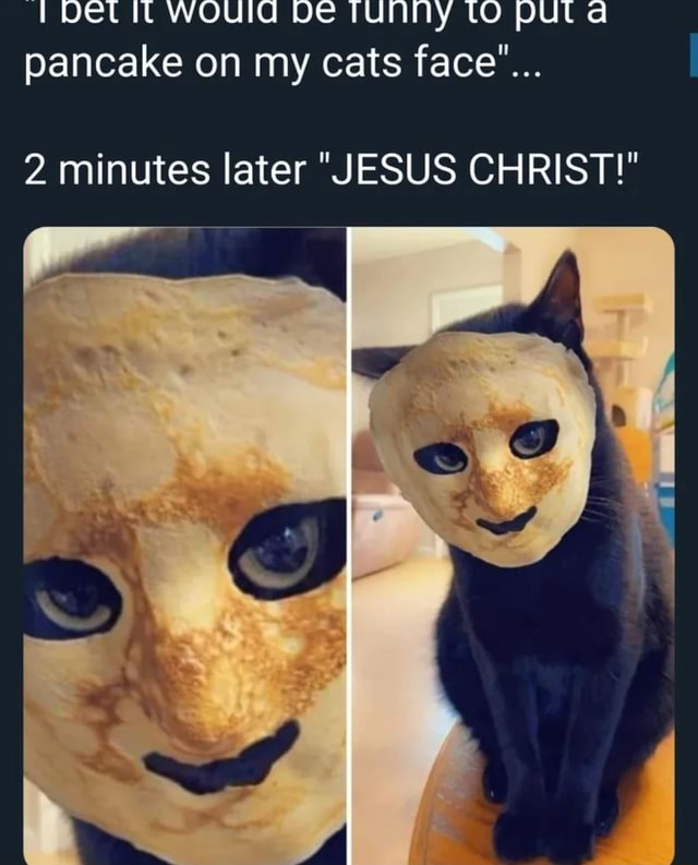 Det WOUId De TUNNY tO PUl pancake on my cats face 2 minutes later JESUS CHRIST memes