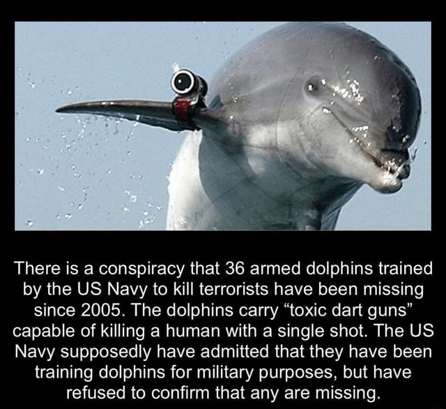 There is a conspiracy that 36 armed dolphins trained by the US Navy to kill terrorists have been missing since 2005. The dolphins carry toxic dart guns capable of killing a human with a single shot. The US Navy supposedly have admitted that they have been training dolphins for military purposes, but have refused to confirm that any are missing memes