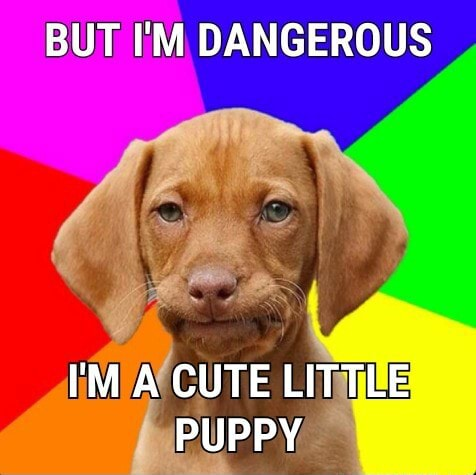 BUT I'M DANGEROUS I'M A CUTE LITTLE PUPPY meme