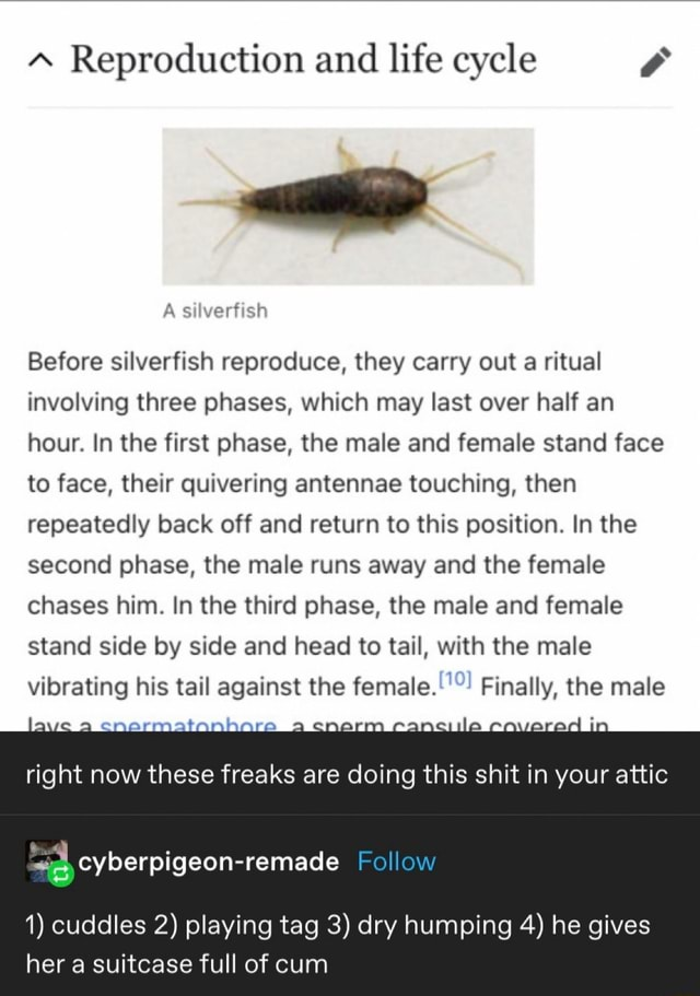 Reproduction and life cycle A silverfish Before silverfish reproduce, they carry out a ritual involving three phases, which may last over half an hour. In the first phase, the male and female stand face to face, their quivering antennae touching, then repeatedly back off and return to this position. In the second phase, the male runs away and the female chases him. In the third phase, the male and female stand side by side and head to tail, with the male vibrating his tail against the female. Finally, the male right now these freaks are doing this shit in your attic Follow 1 cuddles 2 playing tag 3 dry humping 4 he gives her a suitcase full of cum memes