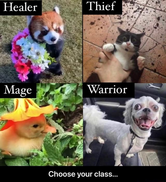 Iealer Thiet Mage Warrior Choose your class  Choose your class memes