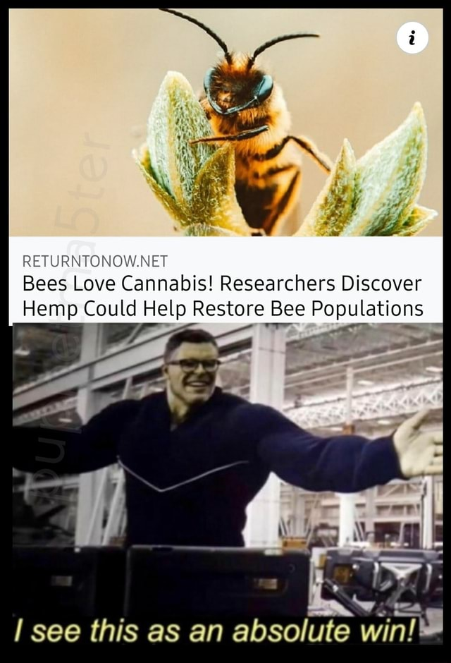 RETURNTONOW.NET Bees Love Cannabis Researchers Discover Hemp Could Help Restore Bee Populations in see this as an absolute wi meme