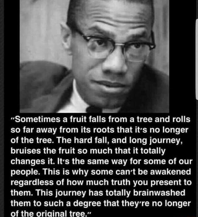 Sometimes a fruit falls from a tree and rolls so far away from its roots that it's no longer of the tree. The hard fall, and long journey, bruises the fruit so much that it totally changes it. Its the same way for some of our people. This is why some can not be awakened regardless of how much truth you present to them. This journey has totally brainwashed them to such a degree that they're no longer of the oriainal tree. memes