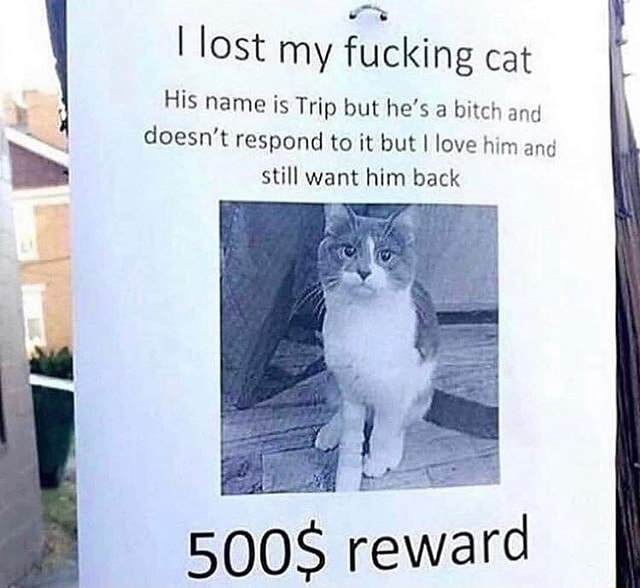 Lost my fucking cat His name is Trip but he's a bitch and doesn't respond to it but I love him and still want him back rev memes