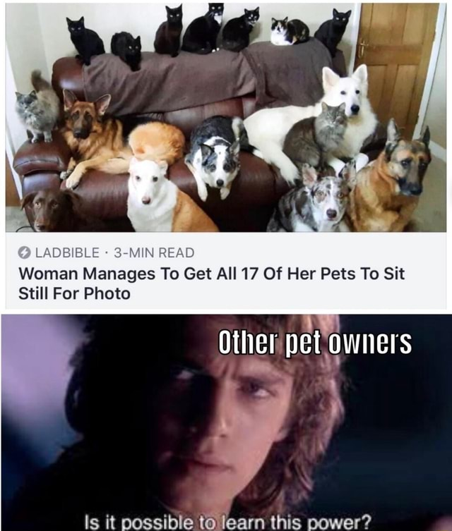 LADBIBLE 3 MIN READ Woman Manages To Get All 17 Of Her Pets To Sit Still For Photo Other pet owners Is it possible to learn this power memes