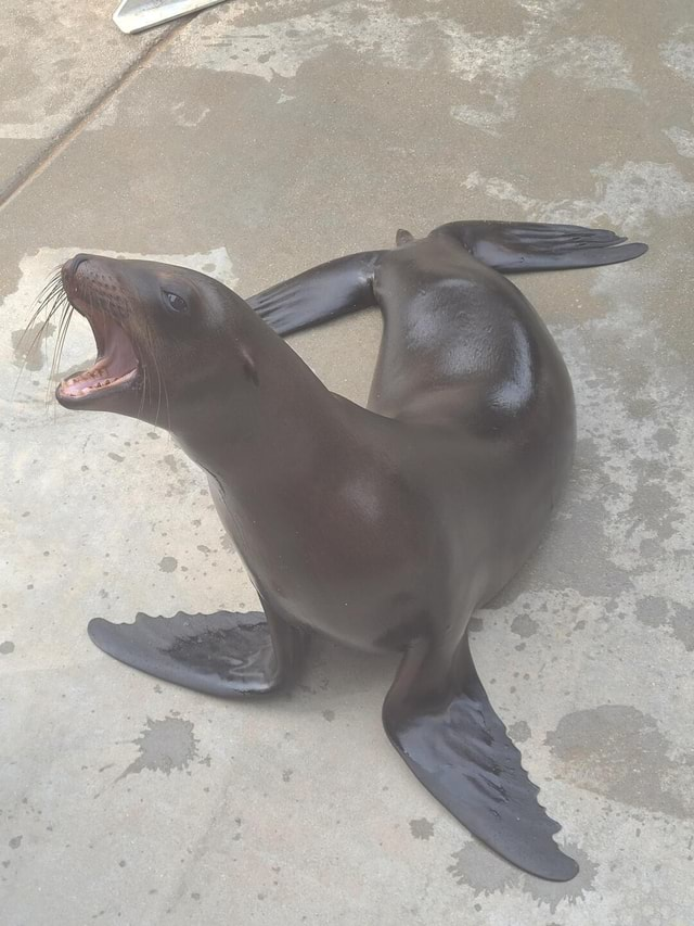 She's our smallest sea lion we have 6 including a bull and was born at the zoo a year ago. They perform two shows a day and enjoy an audience. I now work on the dry side of the zoo with birds, hooved animals, monkeys, and carnivores. If people are interested I'll post again about other animals I take care of. What are some of your favorite animals memes