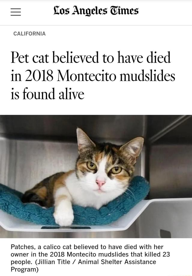 Um, Pet Sematary was fiction, right Right Los Angeles Times CALIFORNIA Pet cat believed to have died in 2018 Montecito mudslides is found alive Patches, a calico cat believed to have died with her owner in the 2018 Montecito mudslides that killed 23 people. Jillian Title Animal Shelter Assistance Program memes