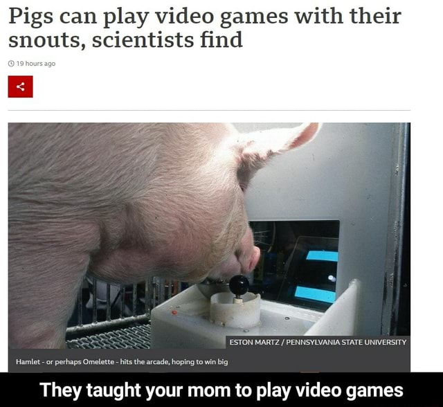 Pigs can play games with their snouts, scientists find ESTON MARTZ PENNSYLVANIA STATE UNIVERSITY. Hamlet or perhaps Omelette hits the arcade, hoping to win big They taught your mom to play games They taught your mom to play games meme
