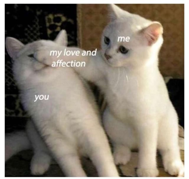 You my ove and afrection memes