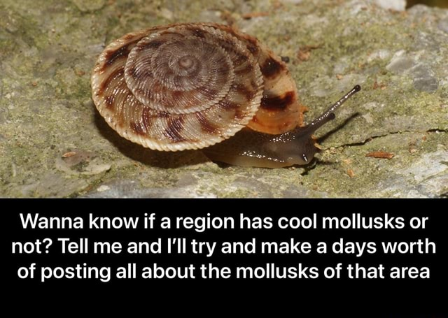 We Wanna know if a region has cool mollusks or not Tell me and I'll try and make a days worth of posting all about the mollusks of that area  Wanna know if a region has cool mollusks or not Tell me and I'll try and make a days worth of posting all about the mollusks of that area memes