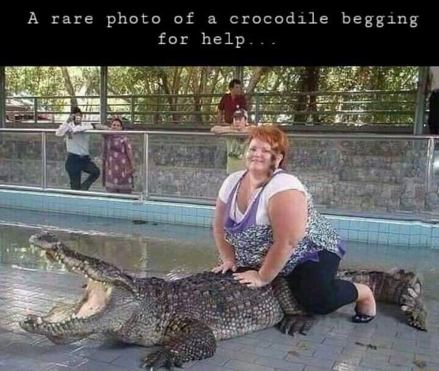 A rare photo of a crocodile begging for help memes