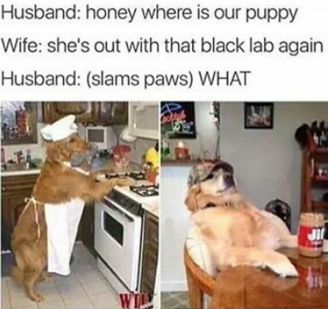 Husband honey where is our puppy Wife she's out with that black lab again Husband slams paws WHAT fl memes