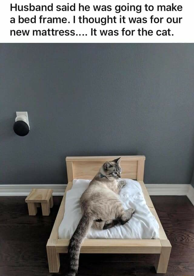 Husband said he was going to make a bed frame. I thought it was for our new mattress It was for the cat memes