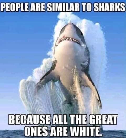 PEOPLE ARE SIMILAR TO SHARKS nf. BECAUSE ALL THE GREAT ONES ARE WHITE meme