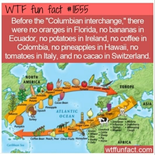 WT fun Before the Columbian interchange, there were no oranges in Florida, no bananas in Ecuador, no potatoes in Ireland, no coffee in Colombia, no pineapples in Hawaii, no tomatoes in Italy, and no cacao in Switzerland. wifiunfact com memes