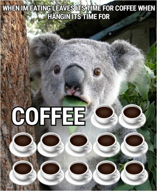 WHEN IM EaTING EATING EATING ITS TIME FOR SS COFFEE WHEN HANGIN ITS TIME FOR COFFEE OO ACL ACLS KAS memes