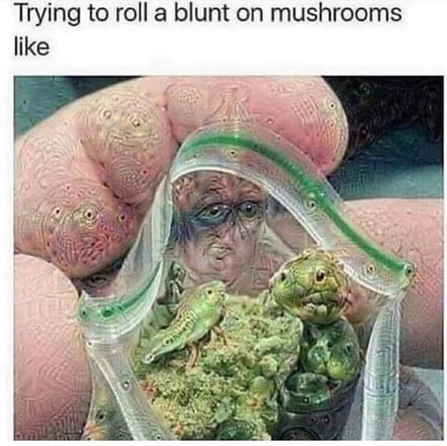 Trying to roll a blunt on mushrooms like memes